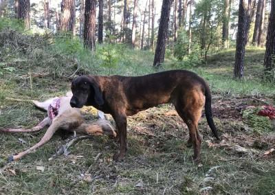 Jagd Tonka und Reh