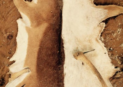 Kalahari Trockenschaben Oryx