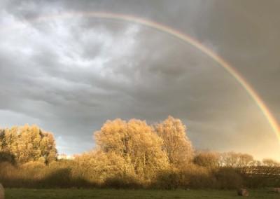 Regenbogen Lapitz 1