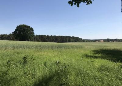 Rottstock Felder