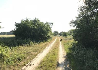 Rottstock Trackingweg